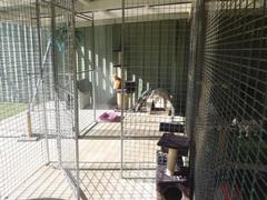 Batemans Bay Cattery
